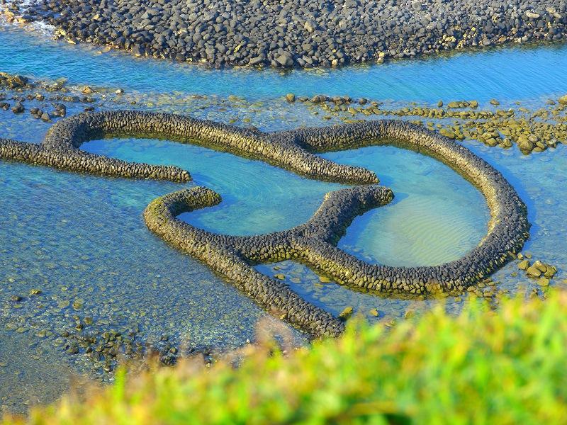 海里最大的蛇图片